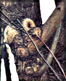 A photo of a faerie stuck in a tree taken by Jim McPherson in Vancouver Canada